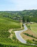 Summer landscape in Langhe, Piedmont Royalty Free Stock Image