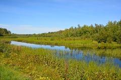 Summer landscape Stock Photography