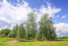 Summer landscape in Latvia, East Europe. Birch trees and forest. Summer landscape in Latvia, East Europe. Birch trees and forest stock photography