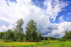 Summer landscape in Latvia, East Europe. Birch trees and white clouds. On blue sky royalty free stock photo