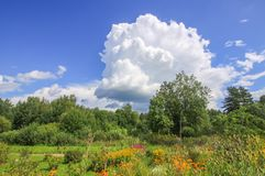 Summer landscape in Latvia, East Europe. Bright flowers and green trees royalty free stock photography