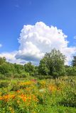 Summer landscape in Latvia, East Europe. Bright flowers and green trees stock photos