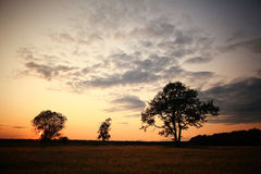 Summer landscape with a lone tree at sunset Royalty Free Stock Photography