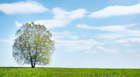 Summer landscape with lonely tree against blue sky Stock Photo