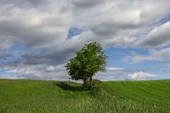 Summer landscape with a lonely tree. Beautiful summer landscape with a single tree in green meadows - plenty of copy space.  Summer landscape with a lonely tree Royalty Free Stock Photo