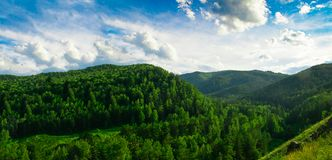 Summer landscape magnificent green hills and forest with different trees against the blue sky. Russia Siberia. stock image