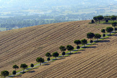 Summer landscape in Marches (Italy) Royalty Free Stock Photo