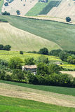 Summer landscape in Marches (Italy) Stock Images