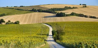Summer landscape in Marches Italy near Filottrano. Rural landscape along the road from Filottrano to Appignano Ancona, Marches, Italy, at summer Royalty Free Stock Photos