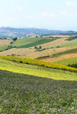 Summer landscape in Marches (Italy) Stock Photo