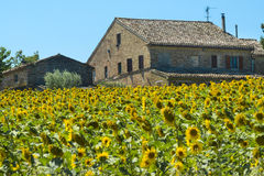 Summer landscape in Marches (Italy) Stock Photos