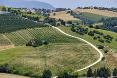 Summer landscape in Marches Italy near Montecassiano. Rural landscape along the road from Montecassiano to Montefano Ancona, Marches, Italy, at summer Royalty Free Stock Photo