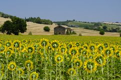 Summer landscape in Marches Italy near Montecassiano. Rural landscape along the road from Montecassiano to Montefano Ancona, Marches, Italy, at summer Royalty Free Stock Photos