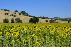 Summer landscape in Marches Italy near Montecassiano. Rural landscape along the road from Montecassiano to Montefano Ancona, Marches, Italy, at summer Stock Images