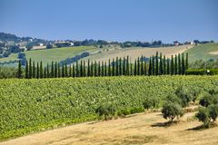 Summer landscape in Marches Italy near Montefano. Rural landscape along the road from Montefano to Castelfidardo Ancona, Marches, Italy, at summer Royalty Free Stock Photography