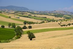 Summer landscape in Marches Italy near Montefano. Rural landscape along the road from Montefano to Castelfidardo Ancona, Marches, Italy, at summer Royalty Free Stock Photo
