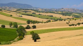Summer landscape in Marches Italy near Montefano. Rural landscape along the road from Montefano to Castelfidardo Ancona, Marches, Italy, at summer Stock Photos