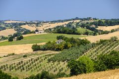 Summer landscape in Marches Italy near Ostra. Rural landscape along the road from Ostra to Jesi Ancona, Marches, Italy at summer Royalty Free Stock Photo
