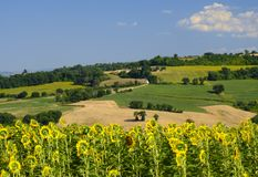 Summer landscape in Marches near Fossombrone Stock Photos