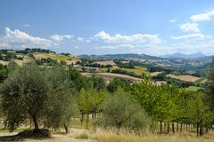 Summer landscape in Marches near Fossombrone Royalty Free Stock Image