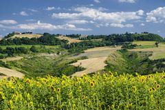Summer landscape in Marches near Fossombrone Stock Images