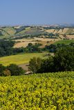 Summer landscape in Marches near Fossombrone Royalty Free Stock Photos