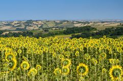 Summer landscape in Marches near Fossombrone Royalty Free Stock Photo