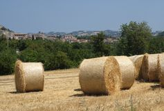 Summer landscape in Marches near Fossombrone Royalty Free Stock Images