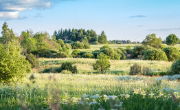 Summer landscape with meadow Royalty Free Stock Photography