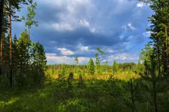 Summer landscape meadow and forest in the background royalty free stock photo