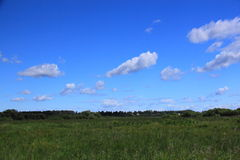 Summer landscape. With meadow in the Moscow region Royalty Free Stock Photography