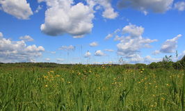 Summer landscape. With meadow in the Moscow region royalty free stock photo