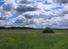 Summer landscape. With meadow in the Moscow region Stock Photo