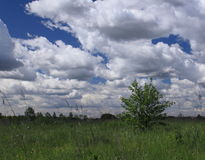 Summer landscape. With meadow in Moscow region stock photography