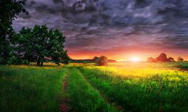 Summer landscape of meadow at vivid sunrise with cloudy sky.  Stock Photos