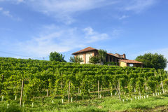 Summer landscape in Monferrato (Italy) Royalty Free Stock Images