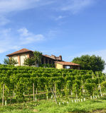 Summer landscape in Monferrato (Italy) Royalty Free Stock Photo