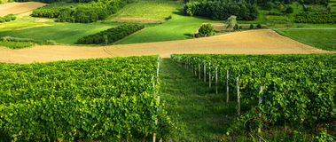 Summer landscape in Monferrato (Italy) Stock Photo