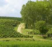 Summer landscape in Monferrato (Italy) Stock Photo