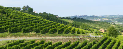 Summer landscape in Monferrato (Italy) Stock Photography