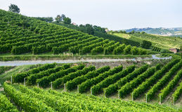 Summer landscape in Monferrato (Italy) Royalty Free Stock Photography
