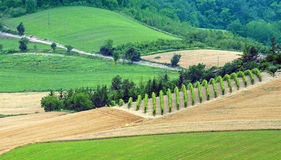 Summer landscape in Monferrato (Italy) Royalty Free Stock Image