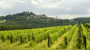 Summer landscape in Monferrato (Italy) Stock Images