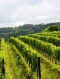 Summer landscape in Monferrato (Italy) Stock Photos