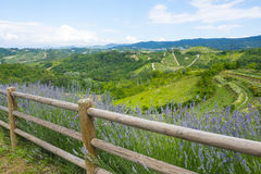 Summer landscape in Monferrato (Italy) Stock Image