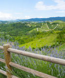 Summer landscape in Monferrato (Italy) Royalty Free Stock Photo