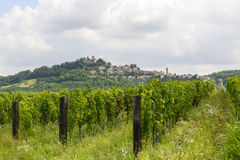 Summer landscape in Monferrato with vineyards Stock Images