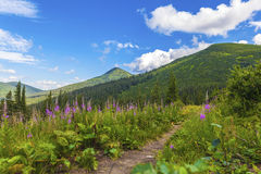 Summer landscape. Of the Montenegrin ridge in Carpathians Royalty Free Stock Image