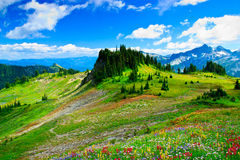 Summer landscape on Mount Rainier Royalty Free Stock Image