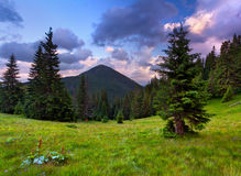 Summer landscape in the mountain Stock Images